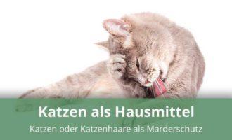Katzenhaare gegen Marder