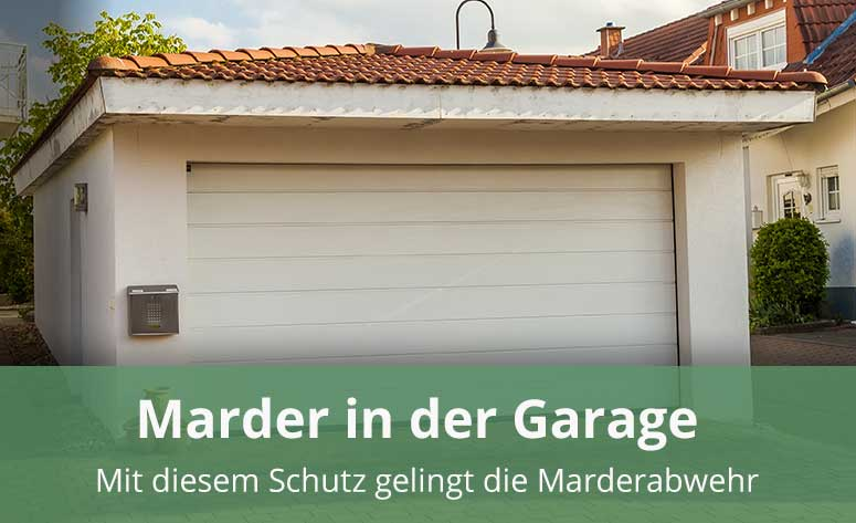Marder in der Garage