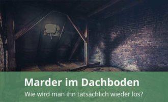 Marder im Dach