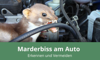 Marderbiss am Auto
