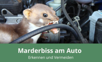 Marderbiss am Auto