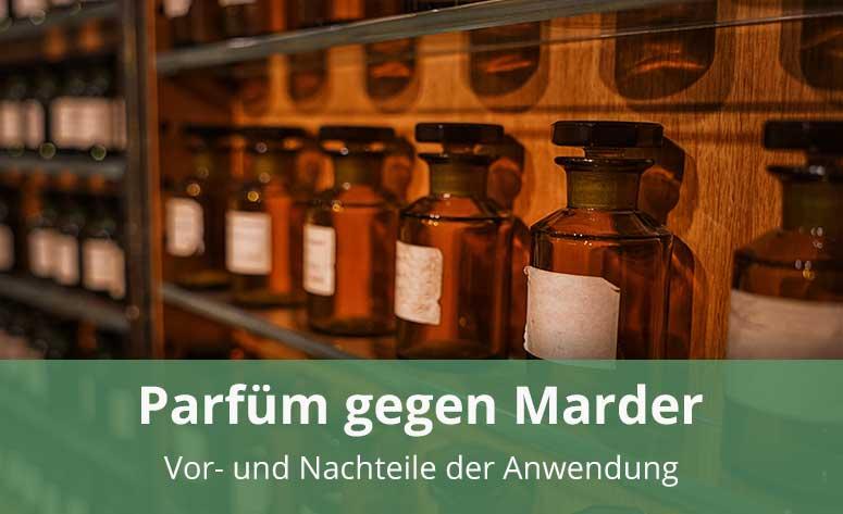 Parfüm als Marderschutz