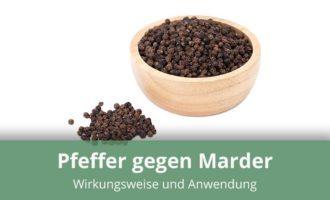 Pfeffer und Pfefferkörner gegen Marder