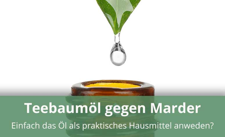 Teebaumöl gegen Marder